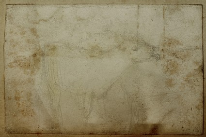 Study of a Calf licking another Animal