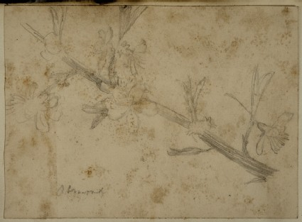 Study of Almond Blossom