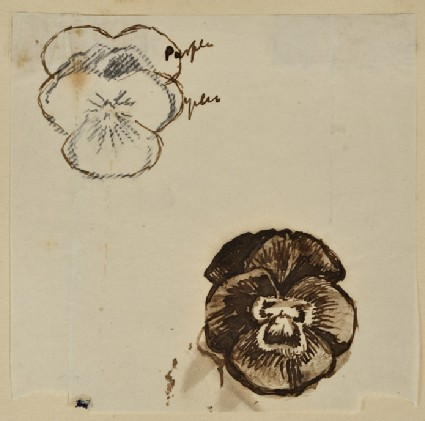Study of two Pansies