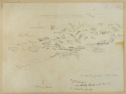 Study of Grass on a Riverbank