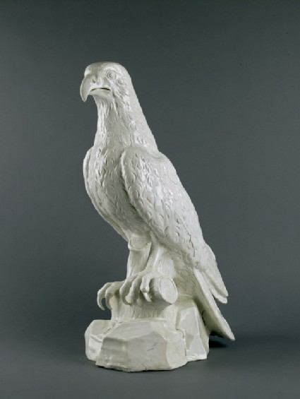 Osprey, seated