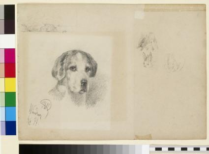 Portrait of a dog: Windsor