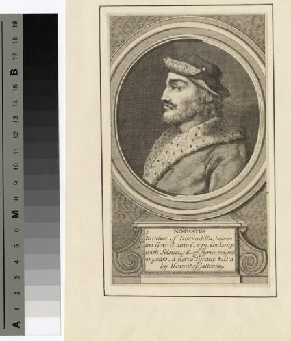 Portrait of Nothatus