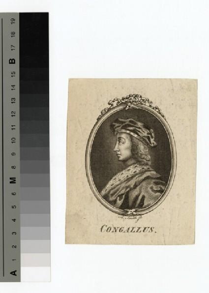 Portrait of Congallus