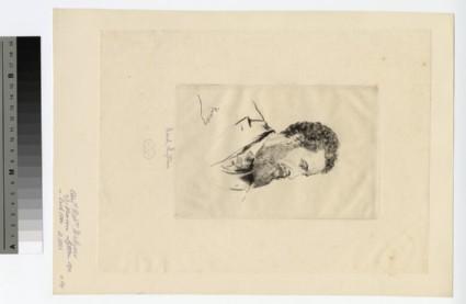 Portrait of Lord Lytton