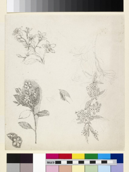 Five plant studies