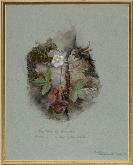 A Wild Strawberry Plant
