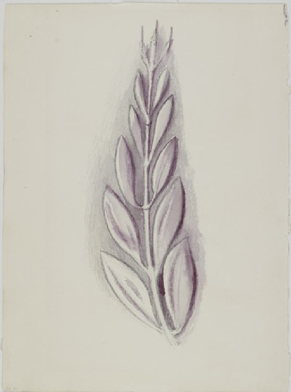 Recto: Study of a Laurel Leaf from a Greek Coin