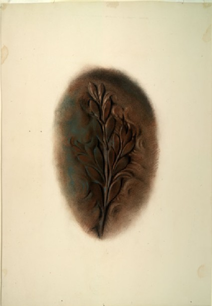 Study of late Greek Treatment of Foliage, from a Coin of Syracuse