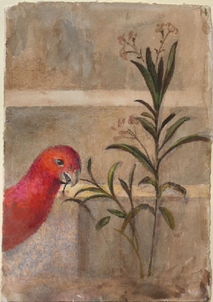 Drawing of a red parrot and plant from Carpaccio's 'Saint George baptises the Selenites'