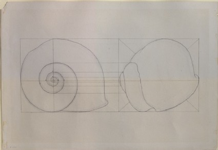 An Exercise on the Outline of a common Snail-Shell