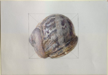 An Exercise on the Colour of a common Snail-Shell
