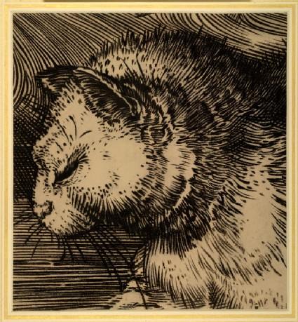 Cat's Head: Enlarged Drawing of Dürer's 'Adam and Eve'