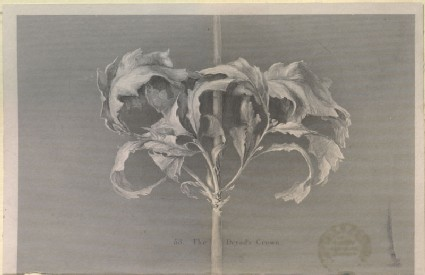 Engraving of John Ruskin's Drawing of the Dryad's Crown: Oak Leaves in Autumn