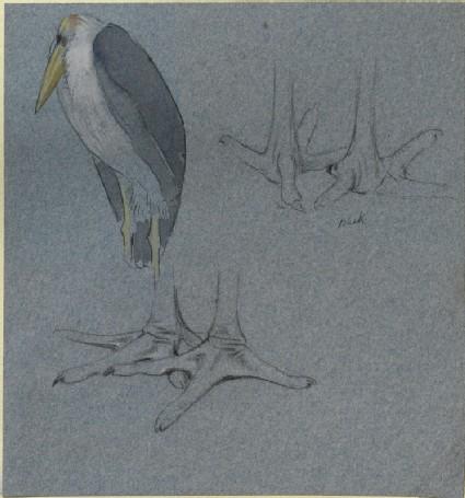 Three Studies of a Marabou Stork