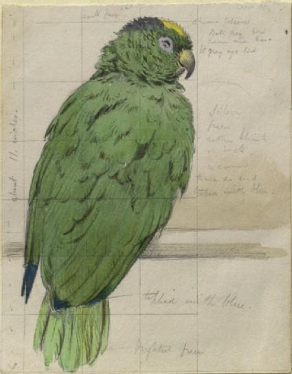 Study of a Bird