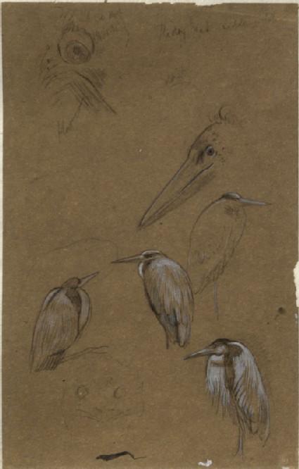 Seven Studies of Birds