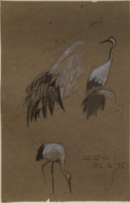 Three Studies of Birds