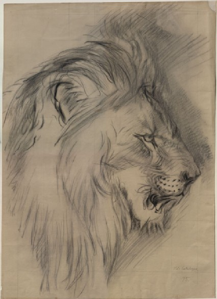 Enlarged Drawing of John Ruskin's 'Sketch of the Head of a living Lion'