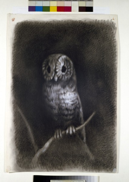 Owl, copied from a Photograph of Mantegna's Fresco of 'The Martyrdom of Saint James' in the Church of Eremitani, Padua
