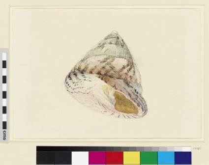 Study of a Shell