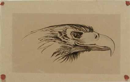 Sketch of the head of a living eagle