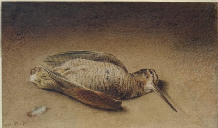 Study of a Woodcock