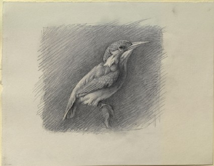 Study of a Kingfisher, with dominant Reference to Shade