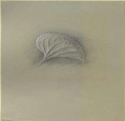 Profile of a Violet Leaf, enlarged