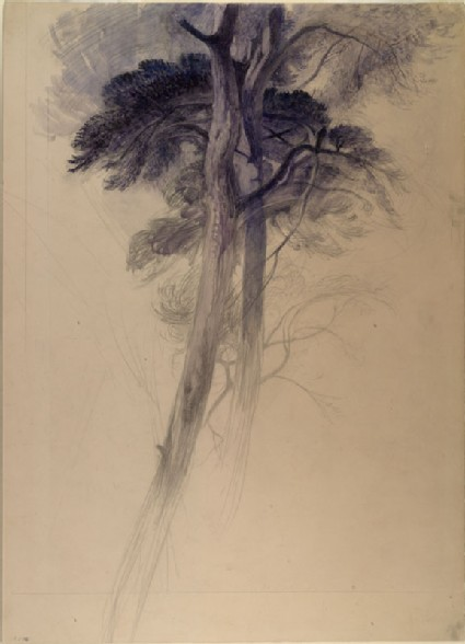 Study of Part of the Trees in Turner's 'Crossing the Brook'
