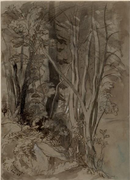 Rough Sketch of Tree Growth: Macugnaga
