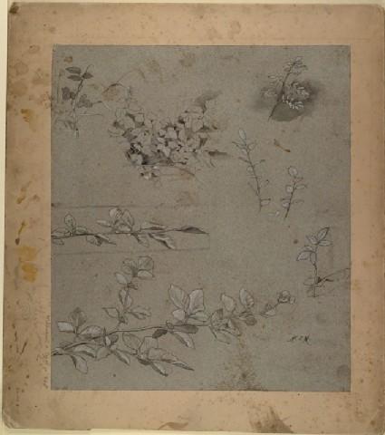 Studies of Foliage