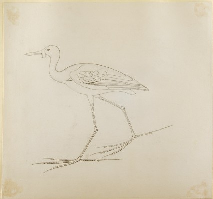 Drawing of an Egyptian Painting of a Bird