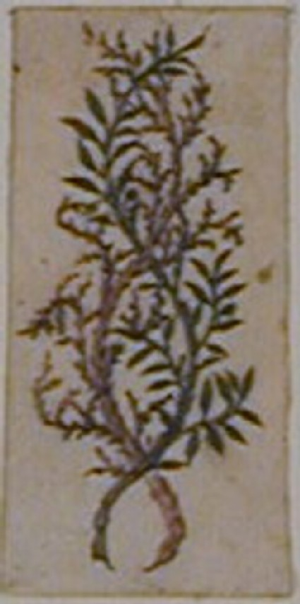 An ornamental design: A branch of heath intertwined with a branch of foliage