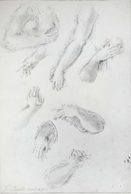 Six Studies of a Woman's right Arm and two of her left Arm
