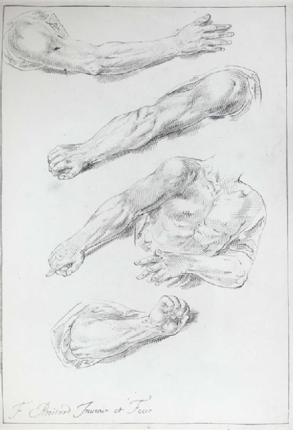Three Studies of a Man's right Arm and one of his Arms and Chest