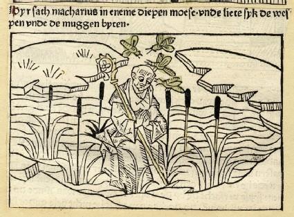 An anchorite in a swamp