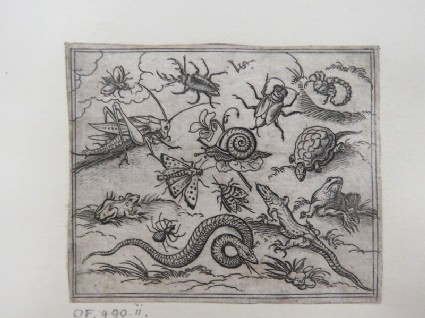 Group of insects and reptiles on plain ground with rocks, including an iguana, a lizard, a snake, a turtle, a scorpion, a snail, a spider, a beetle, and a cricket, from Douce Ornament Prints Album I