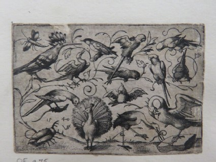 Ten birds on small foliage tendrils with a stork tying a tendril around a pelican's leg, a peacock, and a large beetle in the foreground, from Douce Ornament Prints Album I