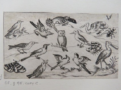 Twelve types of birds, including an owl and pelican, individually labelled and positioned on a minimal ground surrounded by a moth, butterfly, and ladybug, from Douce Ornament Prints Album I