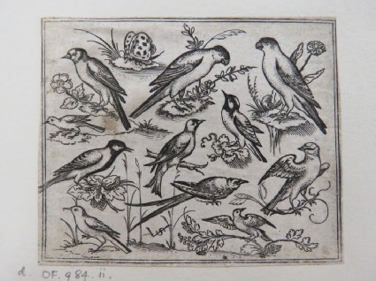 Eleven birds sitting on patches of flowering foliage and small branches on a minimal ground with a butterfly, from Douce Ornament Prints Album I