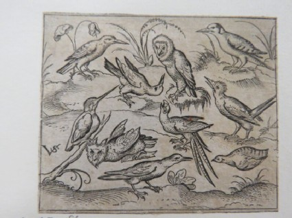 Ten birds sitting on branches and patches of grass, including two owls and a bird with long tail feathers chirping with head back in centre, from Douce Ornament Prints Album I