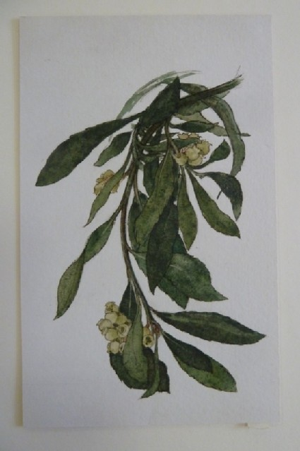 Study of a Plant