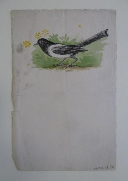 A Magpie