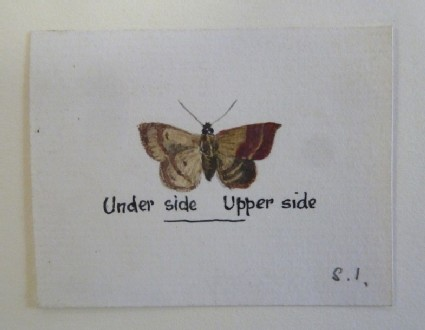 Study of a Butterfly
