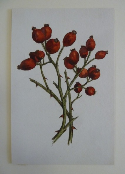 Study of red Berries