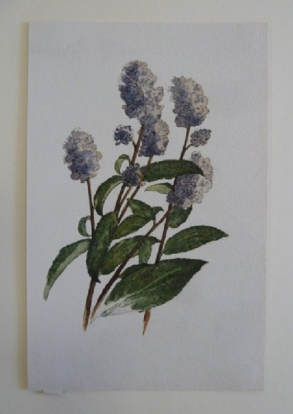 Study of a purple Flower