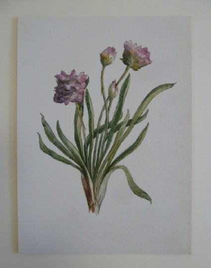 Study of pink wild Flower