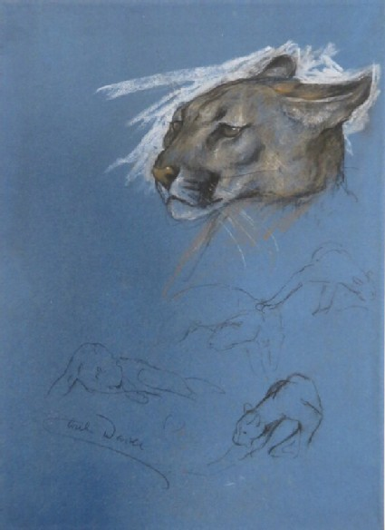 The Head and other Studies of a Puma