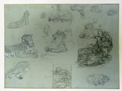 Studies of Felines